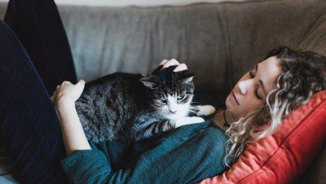 professional cat sitter 3