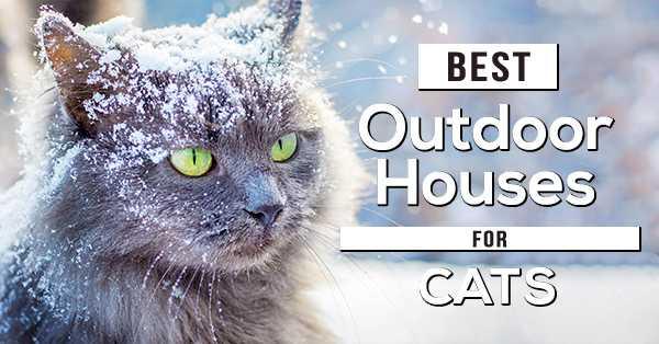 Best Outdoor Cat Houses 4