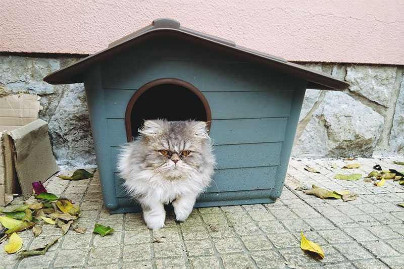 Outdoor cat house 3