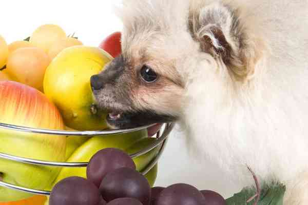 WHAT FRUITS CAN DOGS EAT 3