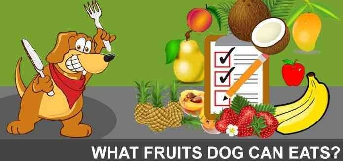 WHAT FRUITS CAN DOGS EAT 4