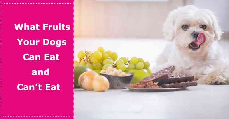 WHAT FRUITS CAN DOGS EAT 5