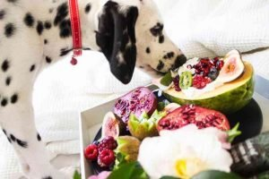 WHAT FRUITS CAN DOGS EAT 8