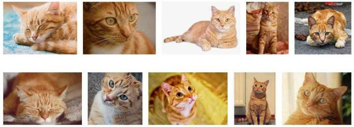 orange tabby cats