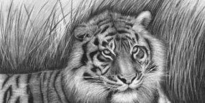 Animal Drawings 1