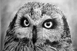 Animal Drawings 5