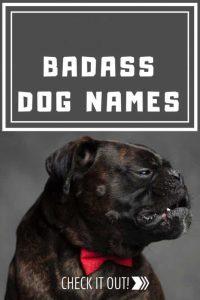 BADASS DOG NAMES 1