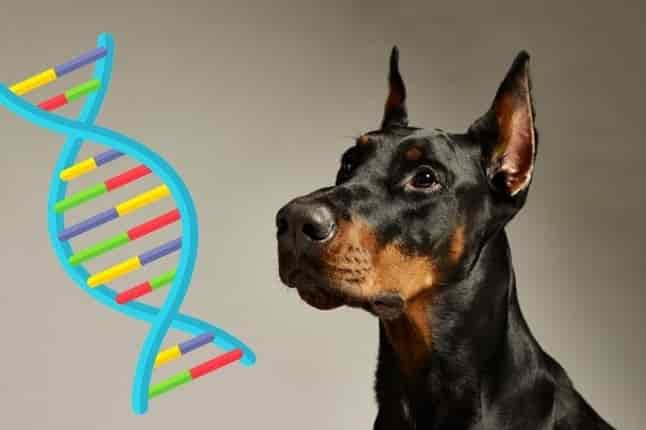 DNA Testing For Dogs 4