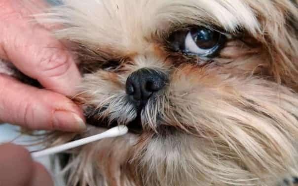 Dog DNA Testing 2