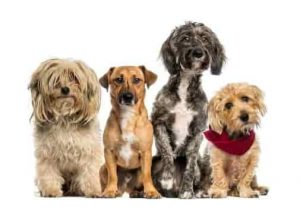 Is DNA Testing for Dogs Useful