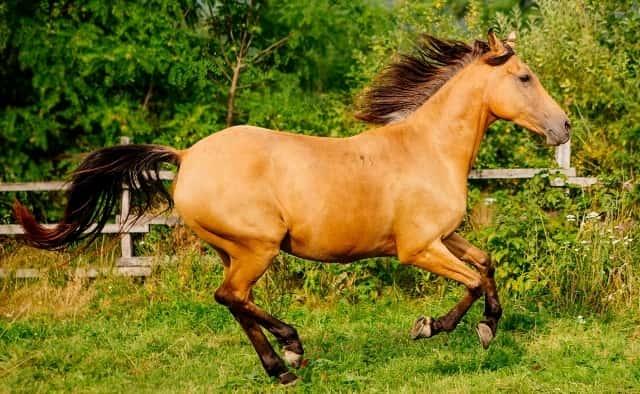 Unique Horse Names 7
