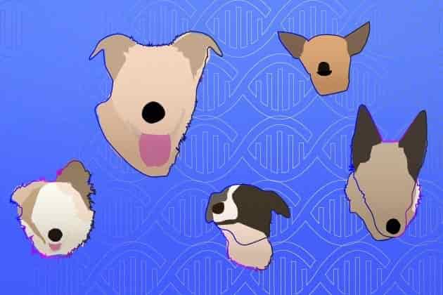 doggy dna tests