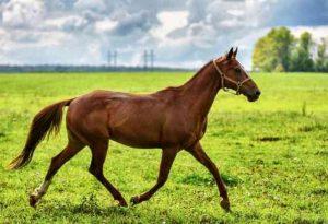 female horse names 1