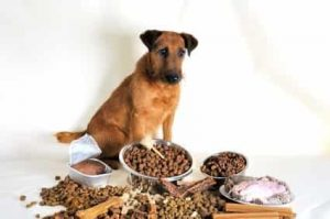 worst dog foods