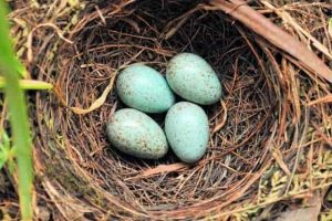Bird Nest 4