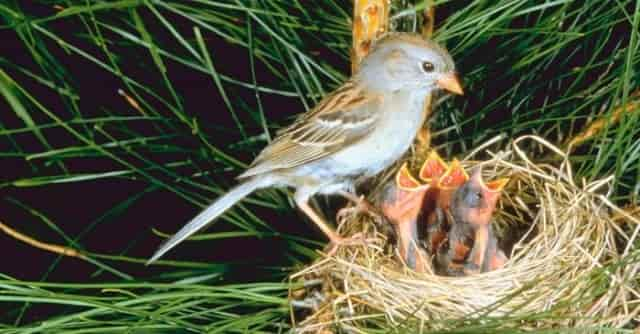 Bird Nest 5