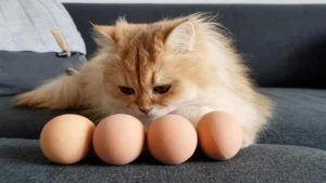Can Cats Eat Raw Eggs