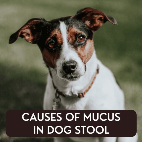 mucus in dogs stool 3