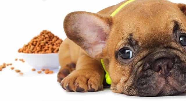 Best Food For French Bulldog Puppy 1
