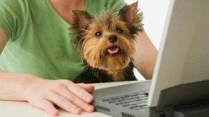 Best Pet Blogs 2