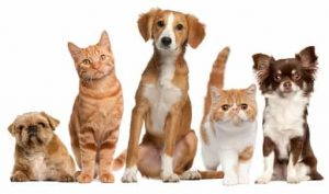 Best Pet Blogs 4