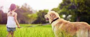 Dog Care 1