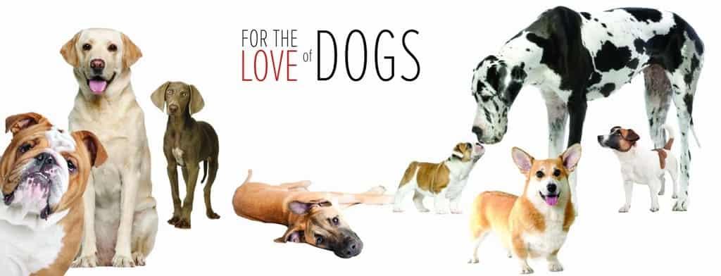 Dog Care 3