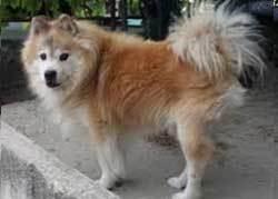 Elo Dog big fluffy dogs