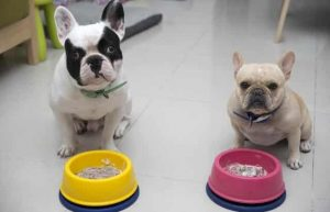 Food For French Bulldog Puppy 1