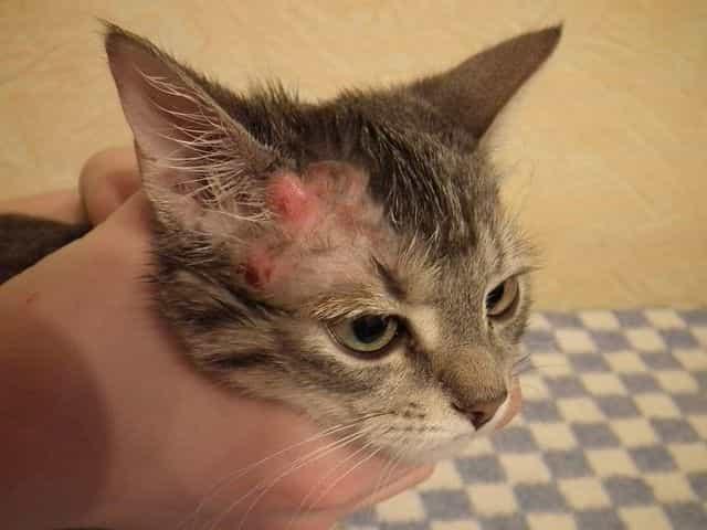 Hot Spots on Feline