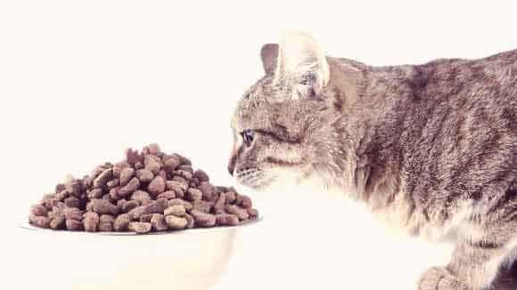 Is Grain Free Cat Food Good