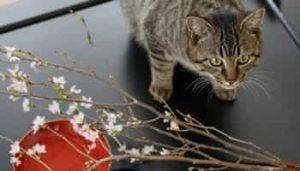 Japanese Cat Names 2