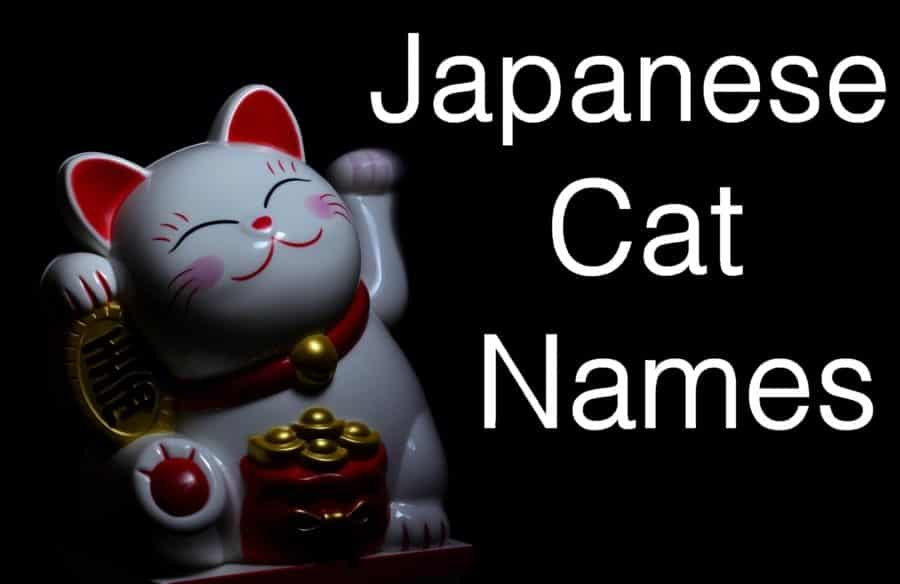 Japanese Cat Names 3