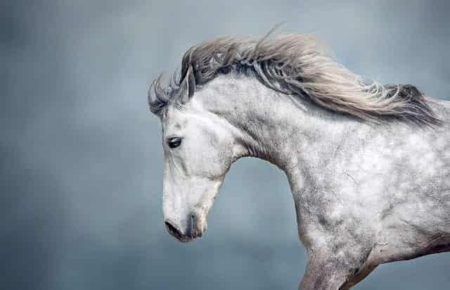 famous white horse names