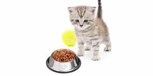 grain free cat food 1