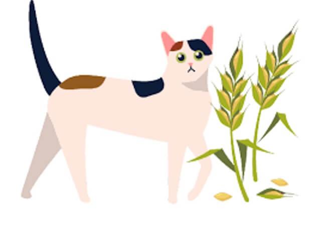 grain free cat food 2