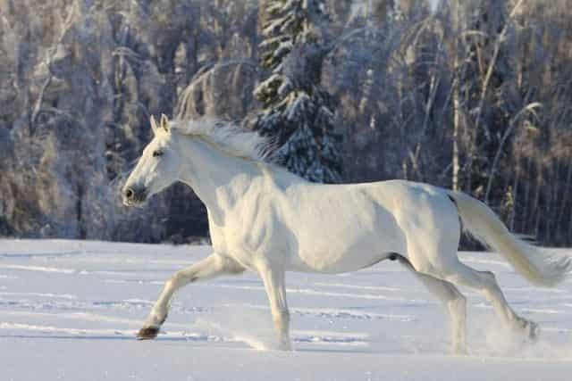 white horse names 1