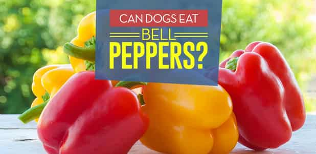 Can Dogs Eat Bell Peppers 3