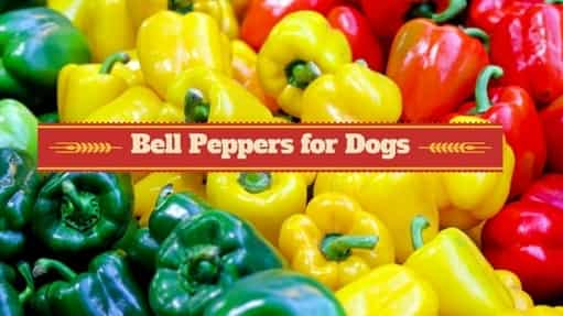 Can Dogs Eat Bell Peppers 4