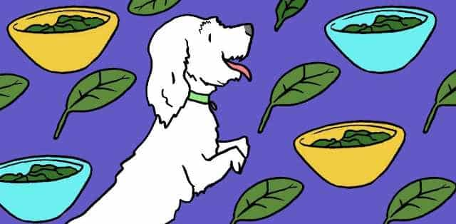 Can Dogs Eat Spinach 1