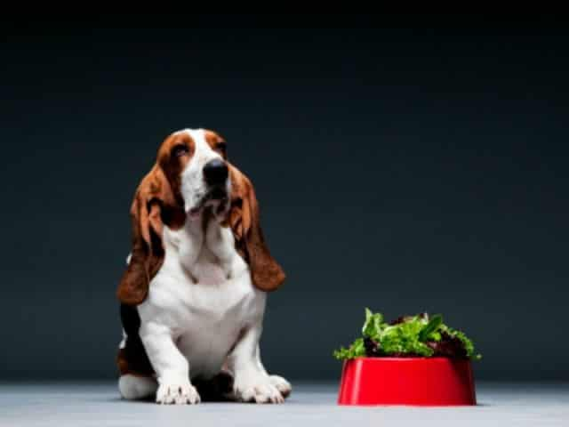 Can Dogs Eat Spinach 2