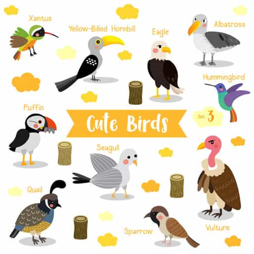 Cute Bird Names
