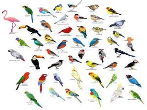 FamousBird Names