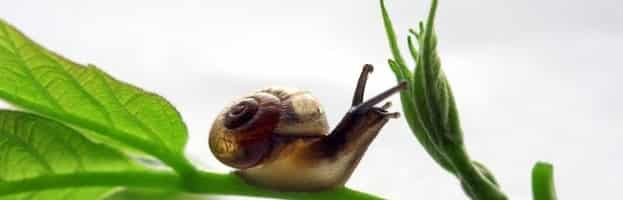 What Do Snails Eat 1