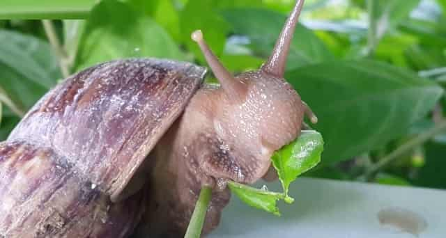 What Do Snails Eat 2