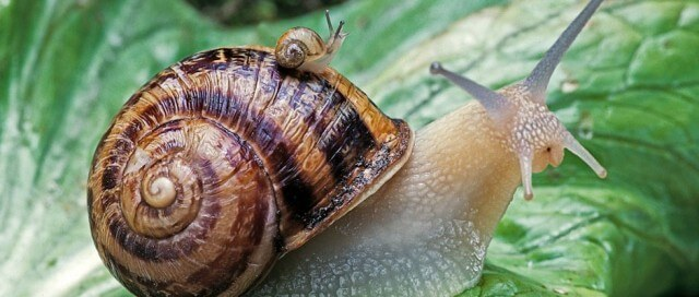 What Do Snails Eat 3