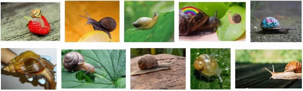 What Do Snails Eat