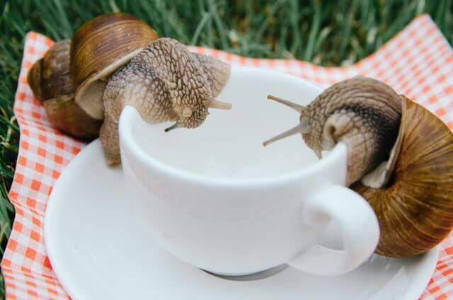What Do Snails Eat 11