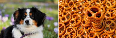 Can Dogs Eat Any Types of Pretzels