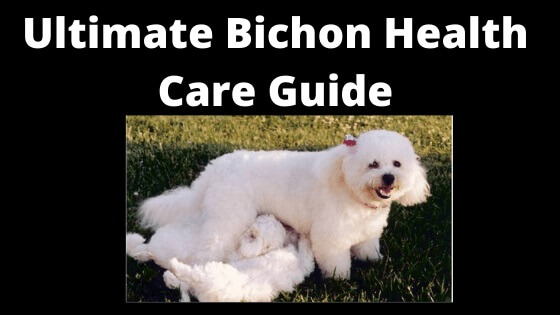 Bechon Fries Health Care Guide